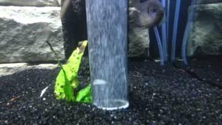DIY underwater waterfall (sand fall) in aquarium
