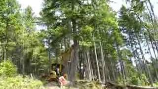 Axe Men Falling Tree British Columbia