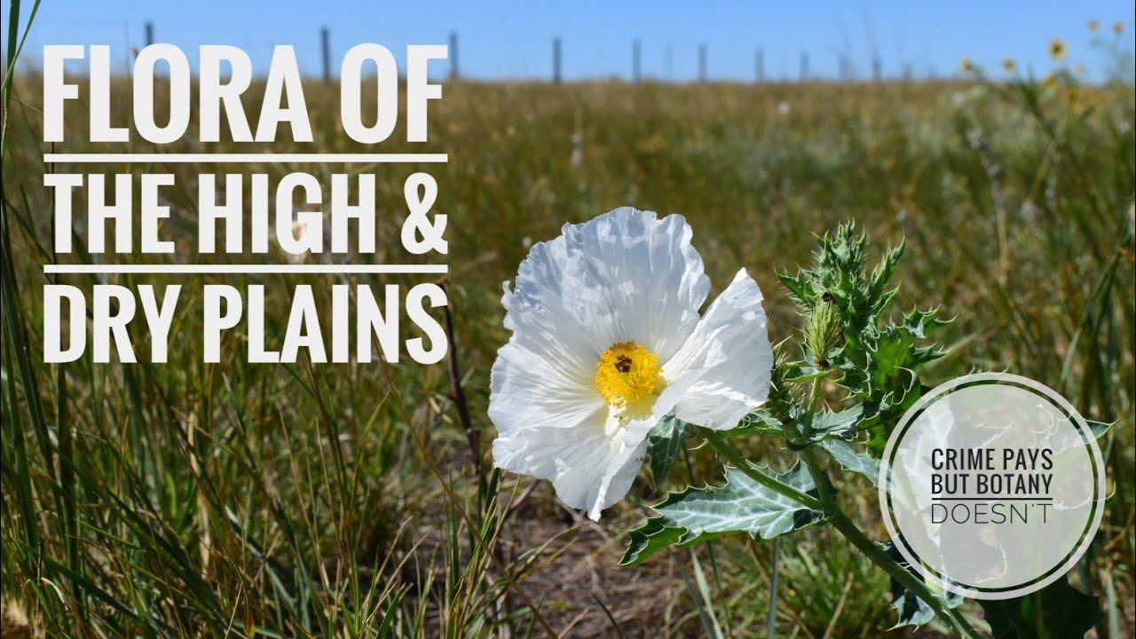 Flora of the High & Dry Plains