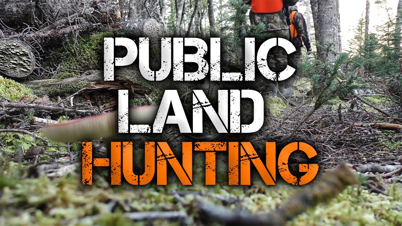 3 Must-Know Public Land Deer Hunting Tips