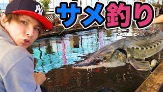 サメが居る釣り堀で沢山釣るぜ!!   PDS thumbnail