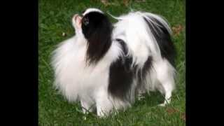 Cutest Dogs Breeds In The World And Cutest Dog Pics For Cutest Dogs Names Ideas And Tips!