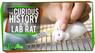 The Curious History of the Lab Rat