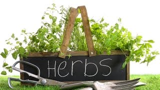 Basics For Beginners: Fool Proof Herb Gardening