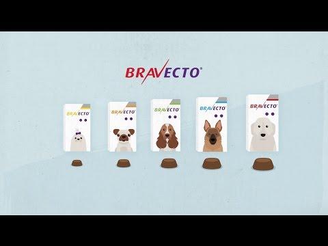¿Cómo funciona Bravecto? Información para Veterinarios