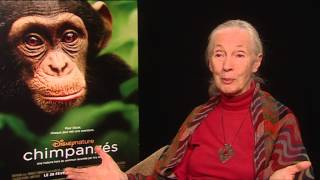 interview dr jane goodall on disneynature s film chimpanzee her faith in humanity