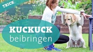Hundetrick Kuckuck beibringen – Hund Tricks beibringen Hundekanal