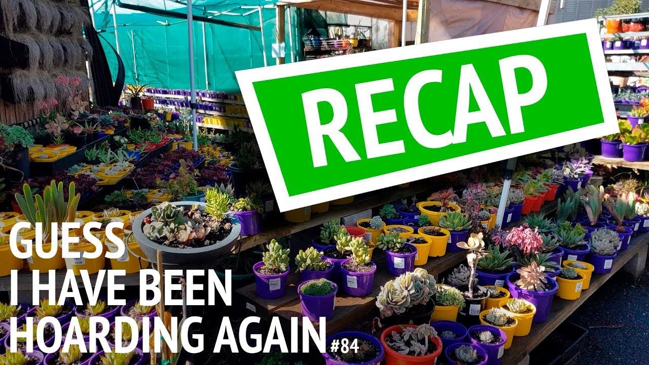 84 Recap Denise Reckons They Need Purple Nursery Pots In Canada