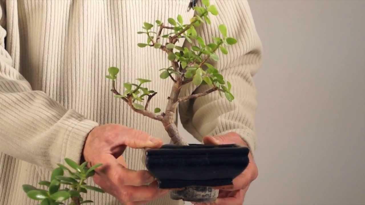 Rinvaso di piante grasse la scelta del vaso adatto youtube for Foto piante grasse particolari