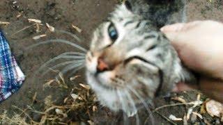 Ищутся добрые руки для кошки. Павлодар. Подробности в описании к видео.