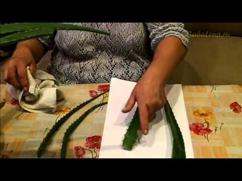 Заготавливаем листья алоэ для нового МК Натуральная косметика ручной работы