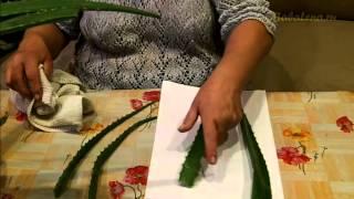 видео Алоэ вера: применение, полезные свойства, заготовка сока