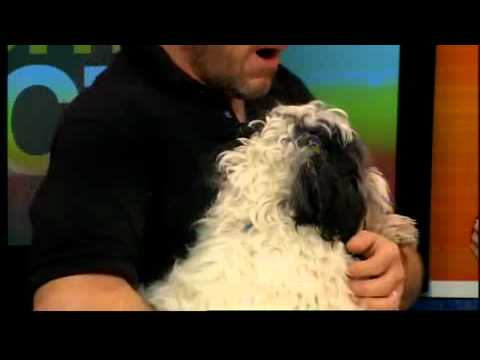 tips for adopting a shelter dog with david henon youtube. Black Bedroom Furniture Sets. Home Design Ideas