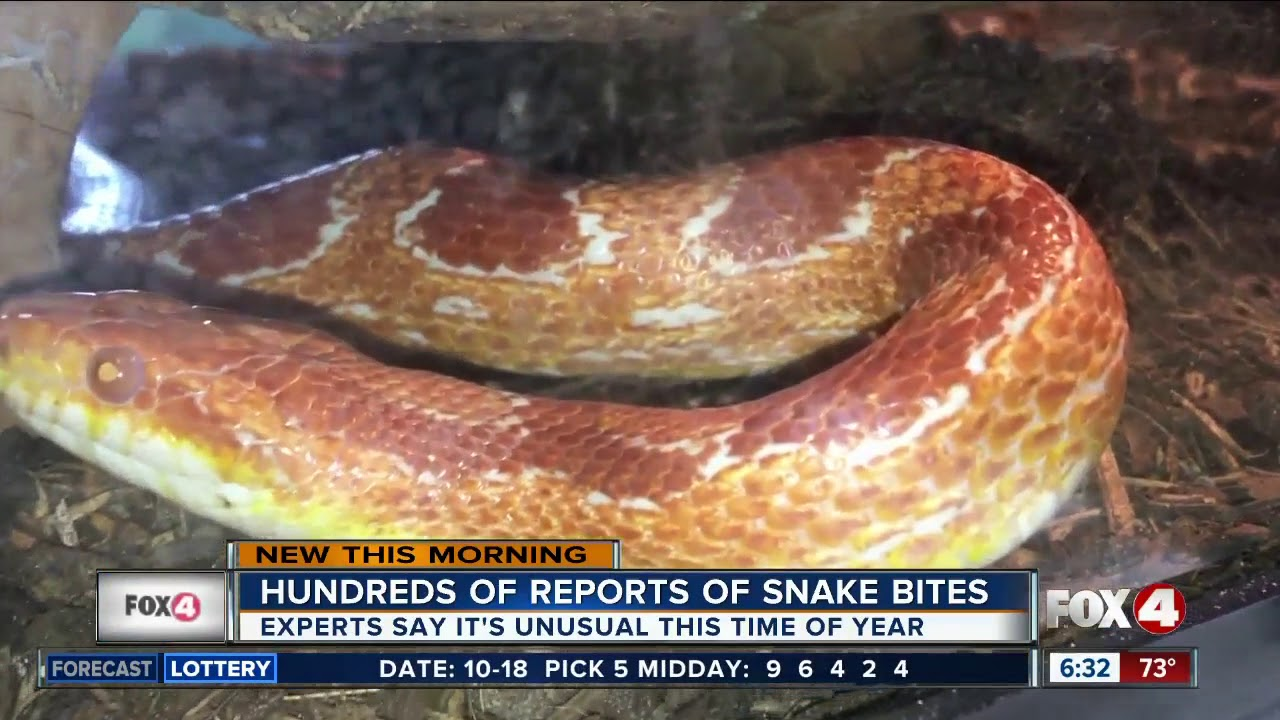 Important facts to know about snakes in Southwest Florida