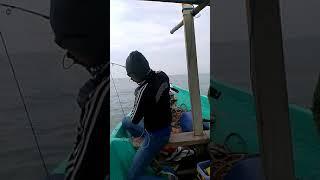 Mancing ikan cukil 15kg..landed..