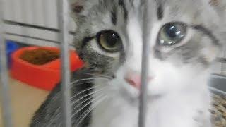 Социальный ролик о бездомных животных. Возьмите друга из приюта!