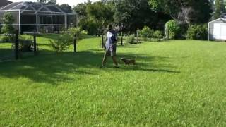 Puppy Training Tips RB Terrier Mixs, How To Train Your Puppy