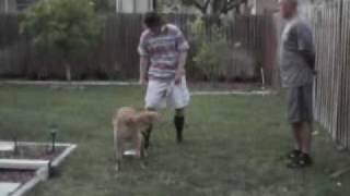 Mack And Jock World Famous Disc Dog Trainers