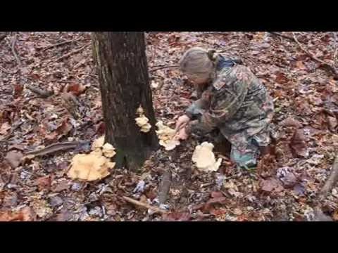 Oyster Mushroom Harvesting In Southern Illinois