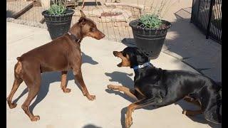 Helping dog to dog aggression