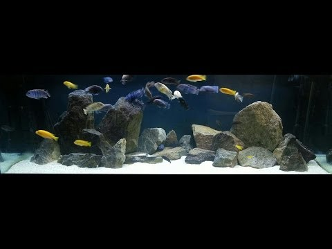 How to Hardscape an African Cichlid Tank
