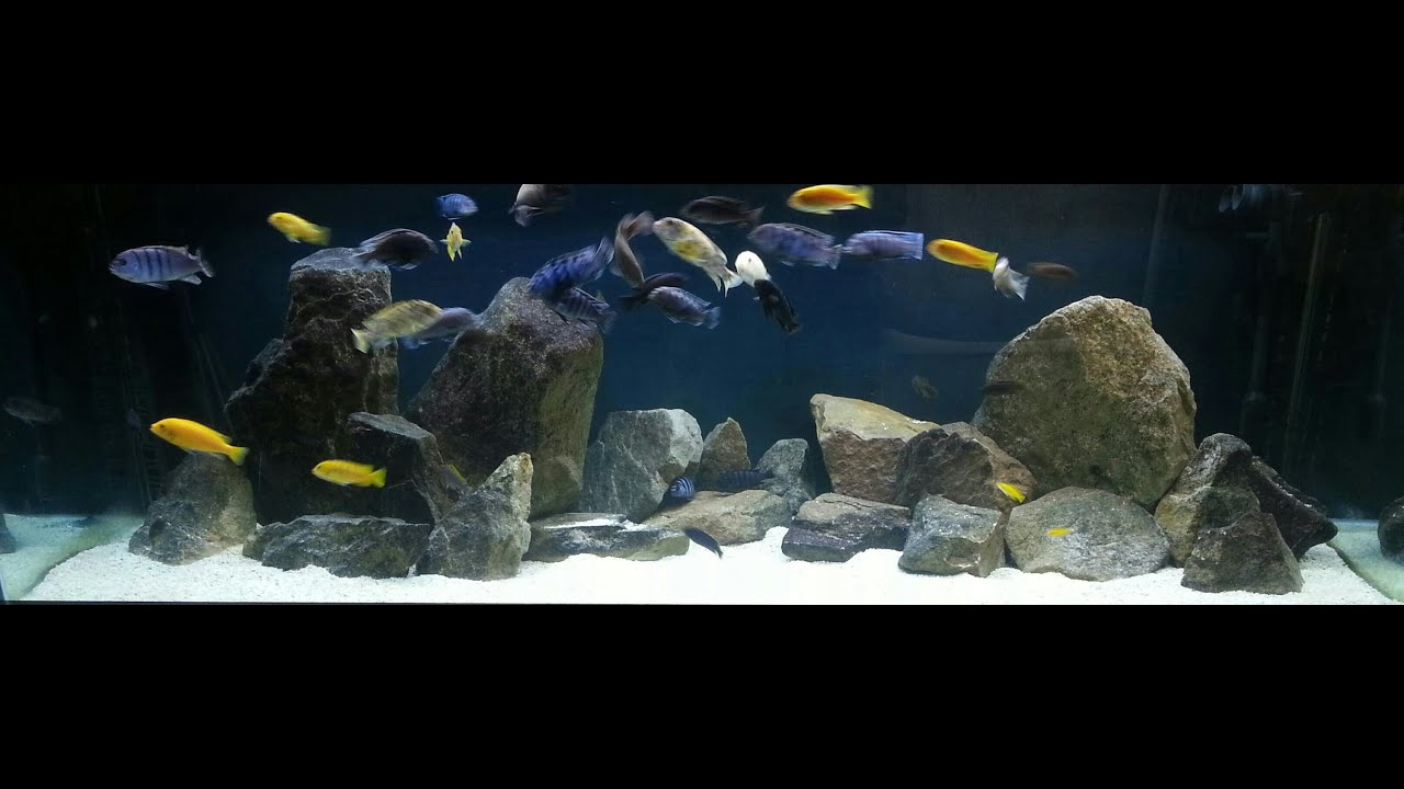 How to hardscape an african cichlid tank youtube for African cichlid rock decoration
