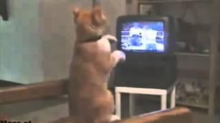 Кот смотрит бокс(Если вам грустно, скучно или просто нечем себя занять просто Смотрите видео, улыбайтесь, настраивайтесь..., 2014-02-22T07:39:45.000Z)