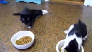 Коты чувствуют ритм :D