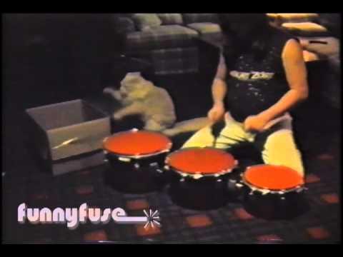 feeding cats baby food