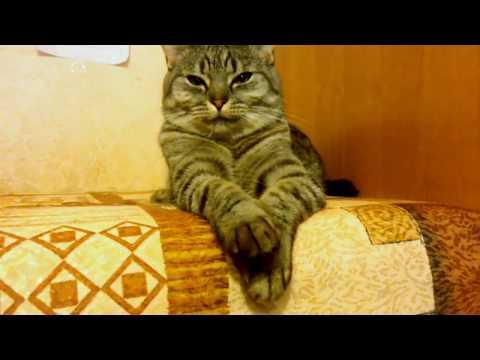 Кошка разговаривает |