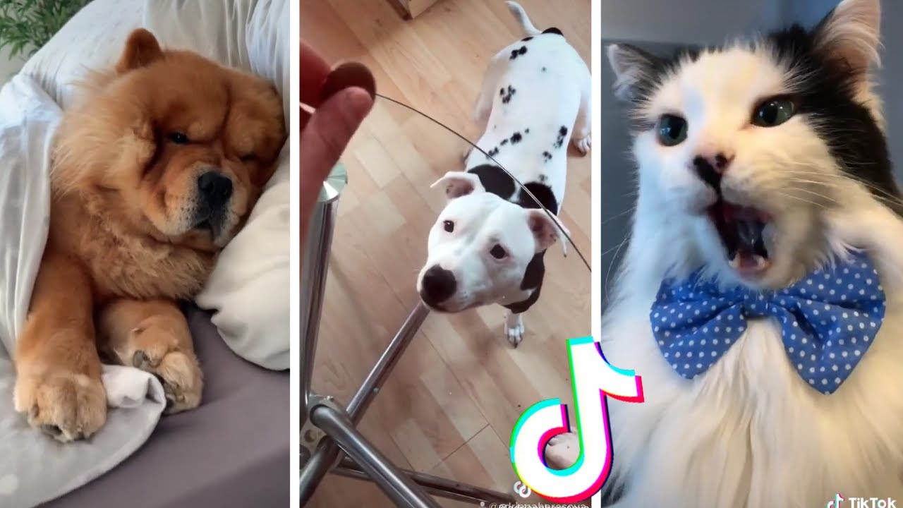 Most Amazing Pets of TikTok ~ Funny Cats & Dogs Compilation TIK TOK