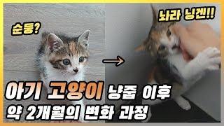 아기 고양이 루비의 냥줍 이후 약 2개월 간의 성장과 변화