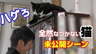 全然なつかない猫 ハウル未公開シーン I Tried To Be Beaten By A Japanese Cat
