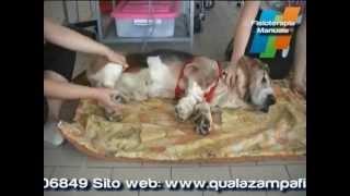 Qua La Zampa fisioterapia veterinaria Torino