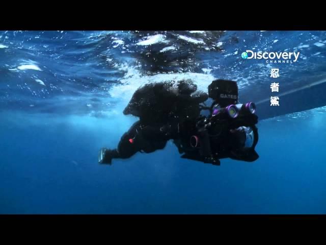 Discovery忍者鯊 008鯊魚繞圈然後吞下被擊昏或死亡的獵物比追單一魚類更有效的狩獵技術 HD MP4檔