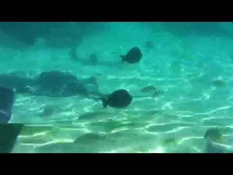 the best attitude 52784 d4b0c Underwater Video iPhone in LifeProof Case