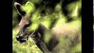 Самые редкие животные в России