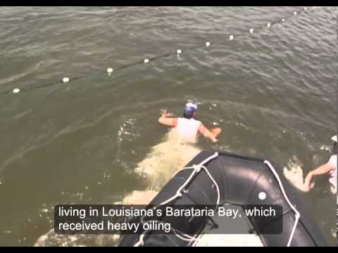 Assessing Dolphin Health in Barataria Bay