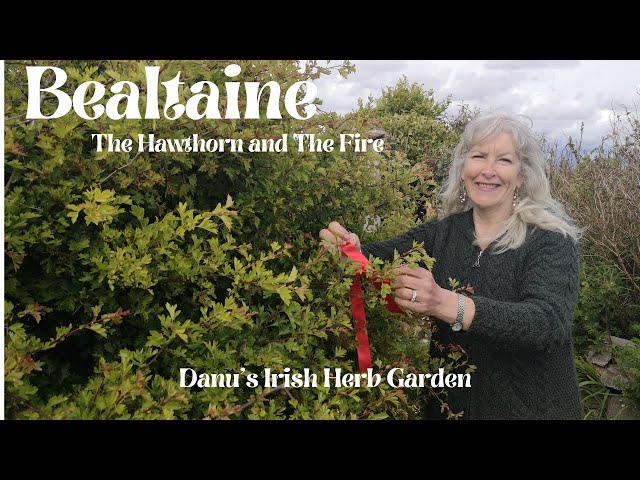 Bealtaine - The Hawthorn and The Fire