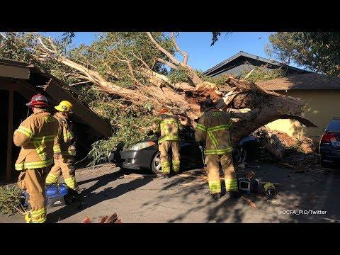 Tree in Tustin falls on car, kills woman inside I ABC7
