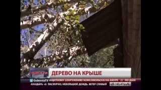 видео Дерево упало на автомобиль