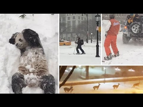 Storm Jonas: How the US reacted to 'Snowzilla'