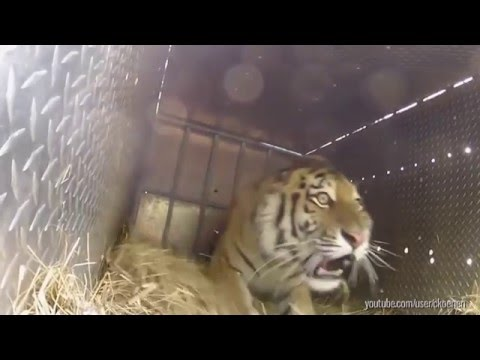Watch These Animals Being Freed for the Very First Time!
