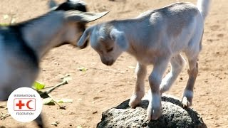 Building resilience to food insecurity in Malawi through livestock distribution