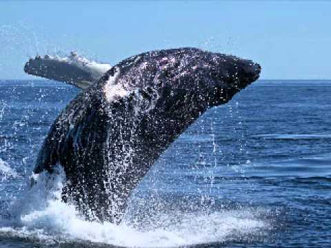 RELAX OR STUDY WITH NATURE SOUNDS: Humpback Whale Song / 1 H