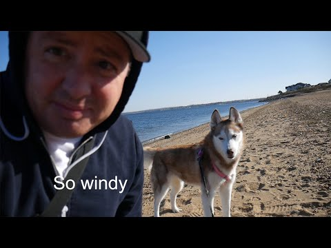 Laika the Husky goes for a walk on the beach!