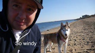 Laika the Husky goes for a walk on the beach!