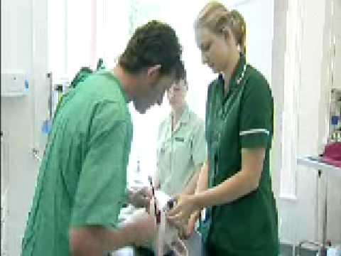 Apprenticeships In Veterinary Nursing