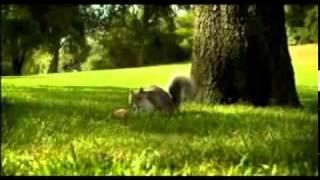 Nestle KIT KAT squirrel Ad Aug 2010 Break Banta Ha.mp4