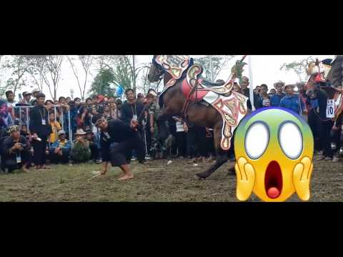 Collection of Story of Renggong Horse 2
